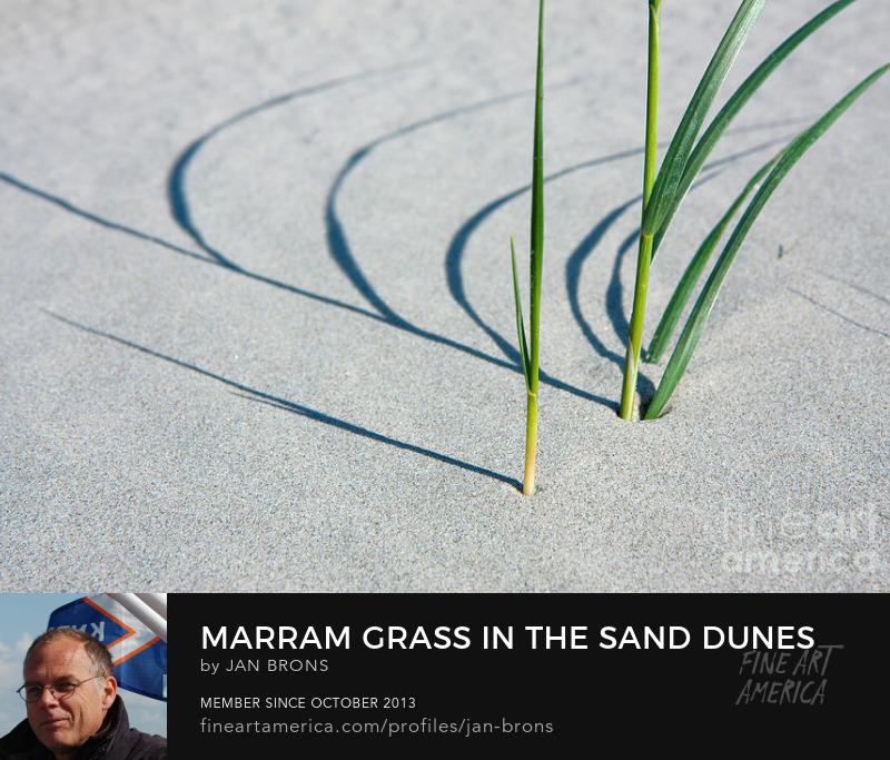 Marram grass in the sand dunes - Sell Art Online