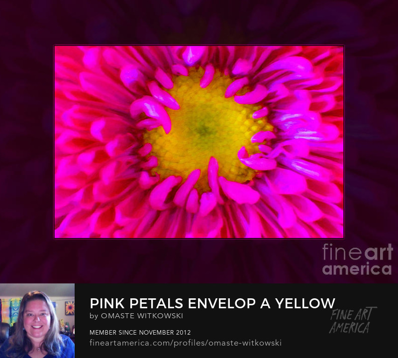 Pink Petals Envelop A Yellow Center Abstract Large Brushes Art Prints