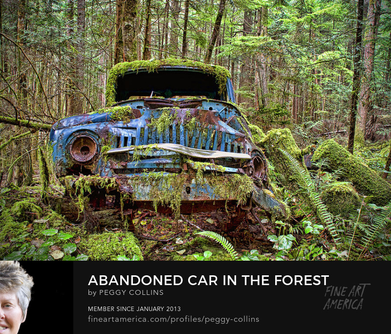 abandoned car in the forest