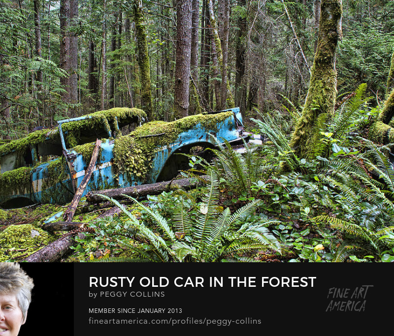 rusty old car in the forest photograph by peggy collins