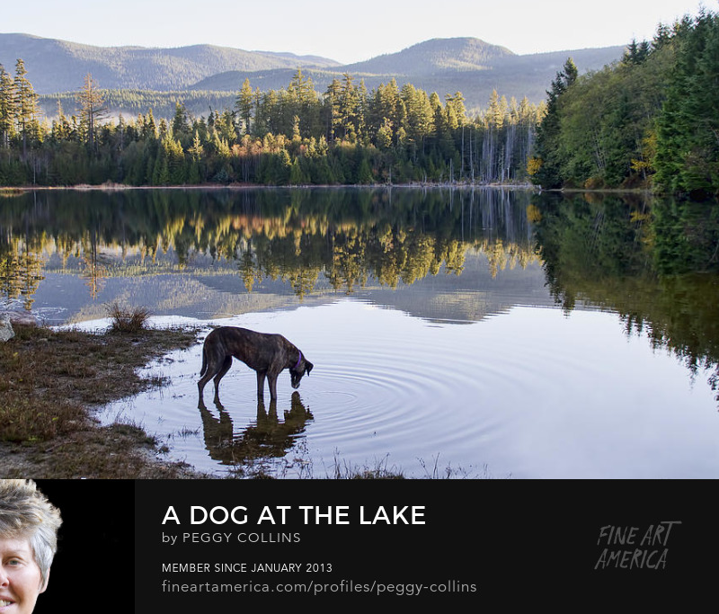 dog at the lake photograph by peggy collins