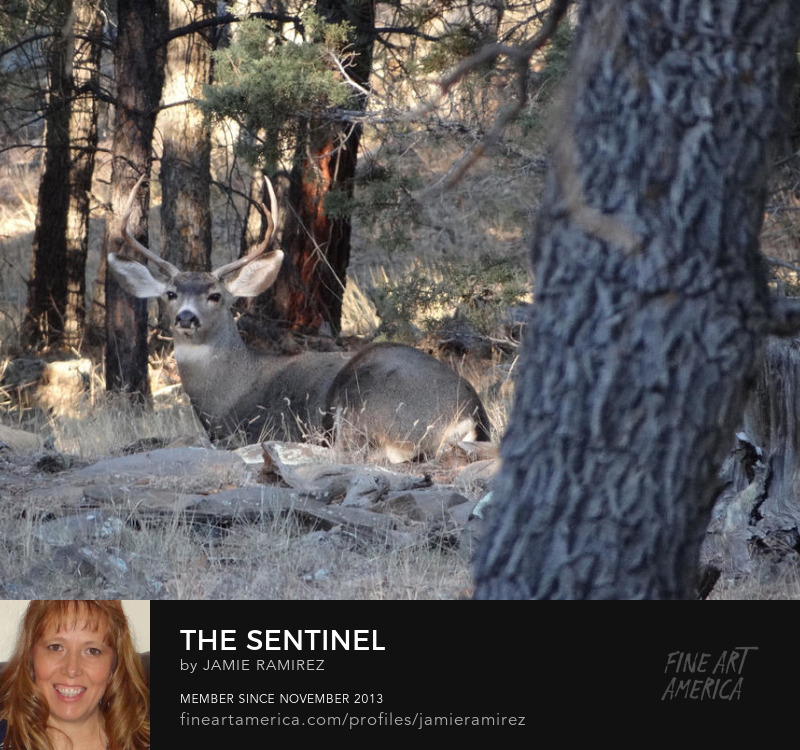 The Sentinel Photo by Jamie Ramirez