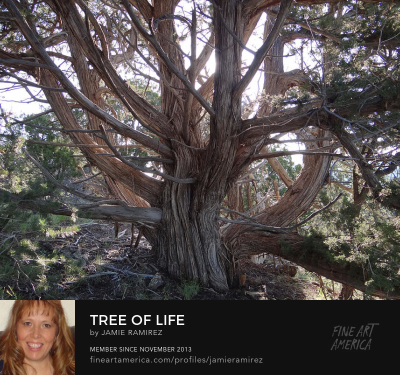 Tree of Life Photo by Jamie Ramirez