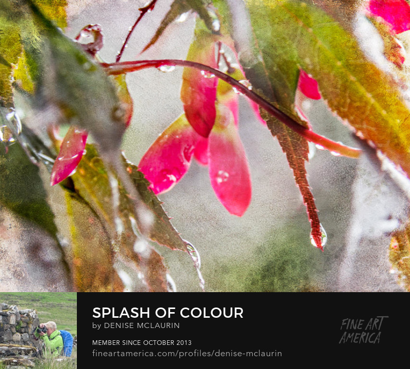 Splash of Colour by Denise McLaurin