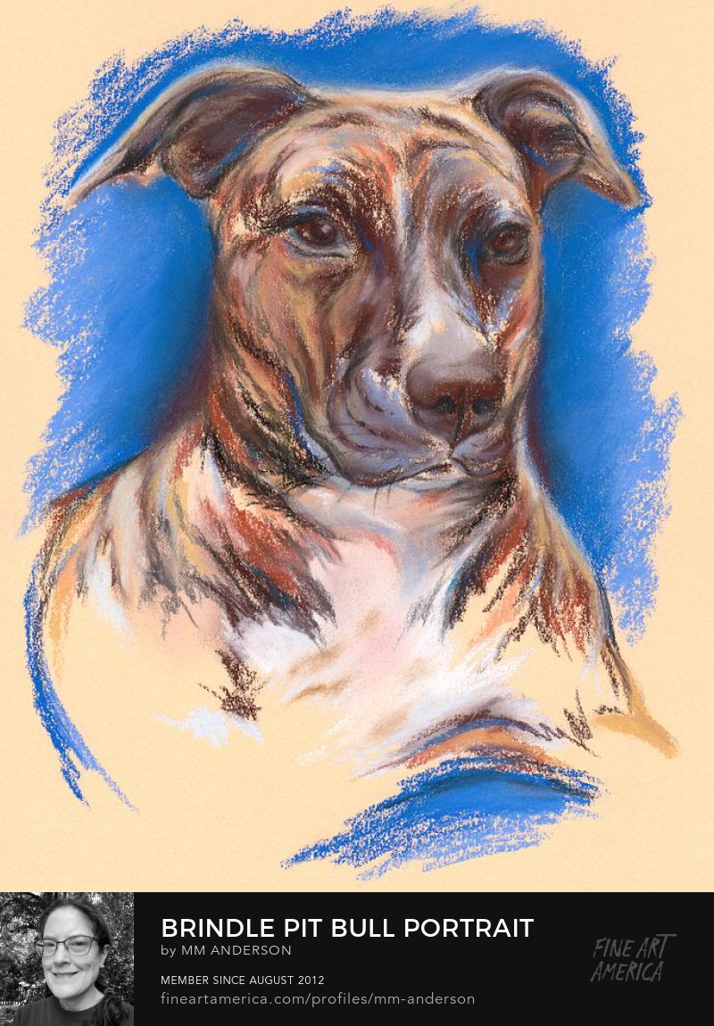 Brindle Pit Bull Portrait pastel artwork by MM Anderson
