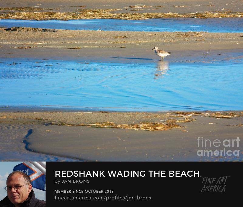 Wader wading the beach - Art Prints