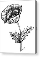 Black And White Poppy Painting By Nancy Rucker