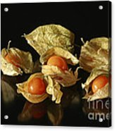 A Taste Of Columbia Physalis Aztec Golden Goose Berry  Acrylic Print