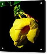 All Yellow Acrylic Print