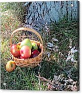 Apples Everywhere Acrylic Print