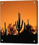 Arizona Sagurao Sunset Acrylic Print
