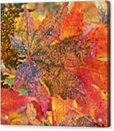 Autumn Audacity I Acrylic Print