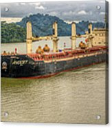 Avocet In The Panama Canal Acrylic Print