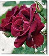 Beautiful Red Roses Acrylic Print