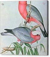 Birds Of Asia Acrylic Print