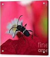 Black Bug Acrylic Print