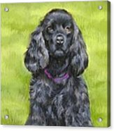 Budwood The Black Cocker Spaniel Acrylic Print
