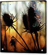 C Est La Vie Sunset Acrylic Print