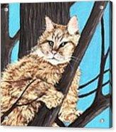 Cat On A Tree Acrylic Print