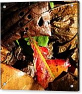 Colored Leaves Acrylic Print