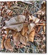 Dead Leaves Acrylic Print