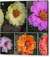 Desert Roses Delight Acrylic Print