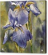 Double Blue Irises Acrylic Print