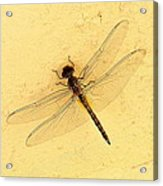 Dragonfly On Yellow Wall Acrylic Print