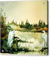 Egrets at Dead Lake Acrylic Print