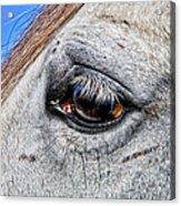 Eye Of A Horse Acrylic Print