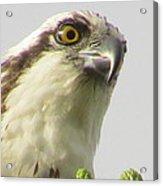 Eye Of The Osprey Acrylic Print