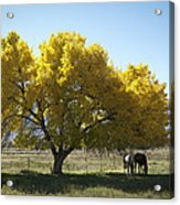 Fall In Bishop California Acrylic Print