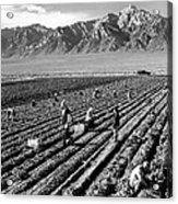 Farm Workers And Mount Williamson Acrylic Print