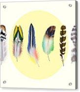 Feathers 2 Acrylic Print
