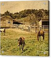 Feral Horses Of Ocracoke Acrylic Print