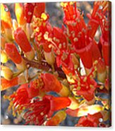 Fiery Orange Flower Acrylic Print