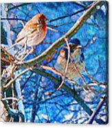 Finch And Blue Jay - California Winter Day Acrylic Print