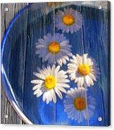 Five Daisies Acrylic Print