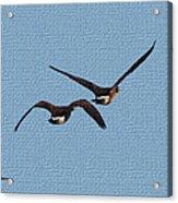Fleeing Geese Acrylic Print