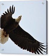 Flight Of Freedom Acrylic Print