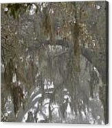 Fog In Mossy Oaks Acrylic Print