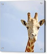 Friendly Giraffe Acrylic Print