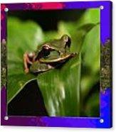 Frog Hideous Green Amphibian Acrylic Print
