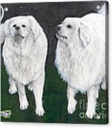 Great Pyrenees Dogs Night Sky Cathy Peek Animal Art Acrylic Print