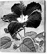Hibiscus Art Acrylic Print