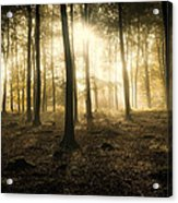 Kings Wood In Autumn Acrylic Print