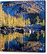 Larch Tree Reflection In Leprechaun Lake Acrylic Print