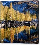 Larch Tree Reflection  Acrylic Print