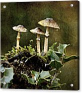 Little Mushrooms Acrylic Print