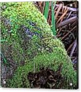 Mossy Dead Log Acrylic Print